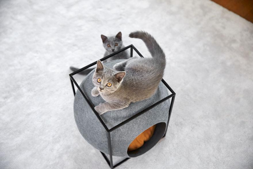 cat-cocoon-meyou-sanchez-gadenne-15