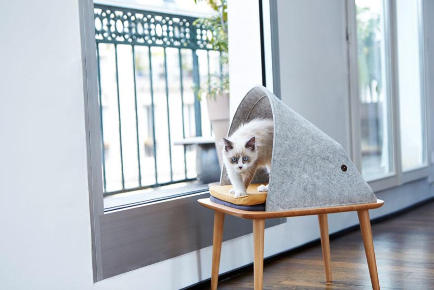 cat-cocoon-meyou-sanchez-gadenne-8